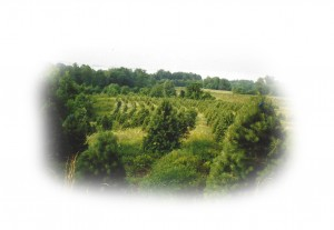 Roehler's Tree Farm